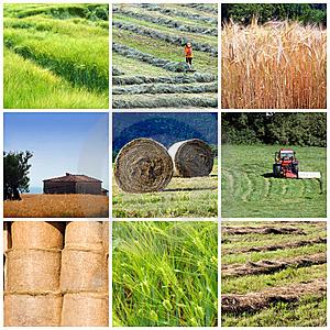 agriculture-profits