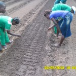 Get Hands on Traing at Songhai farm
