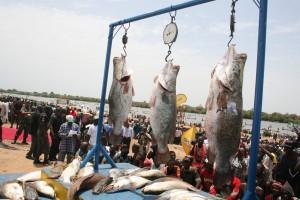 fishing-prize argungu